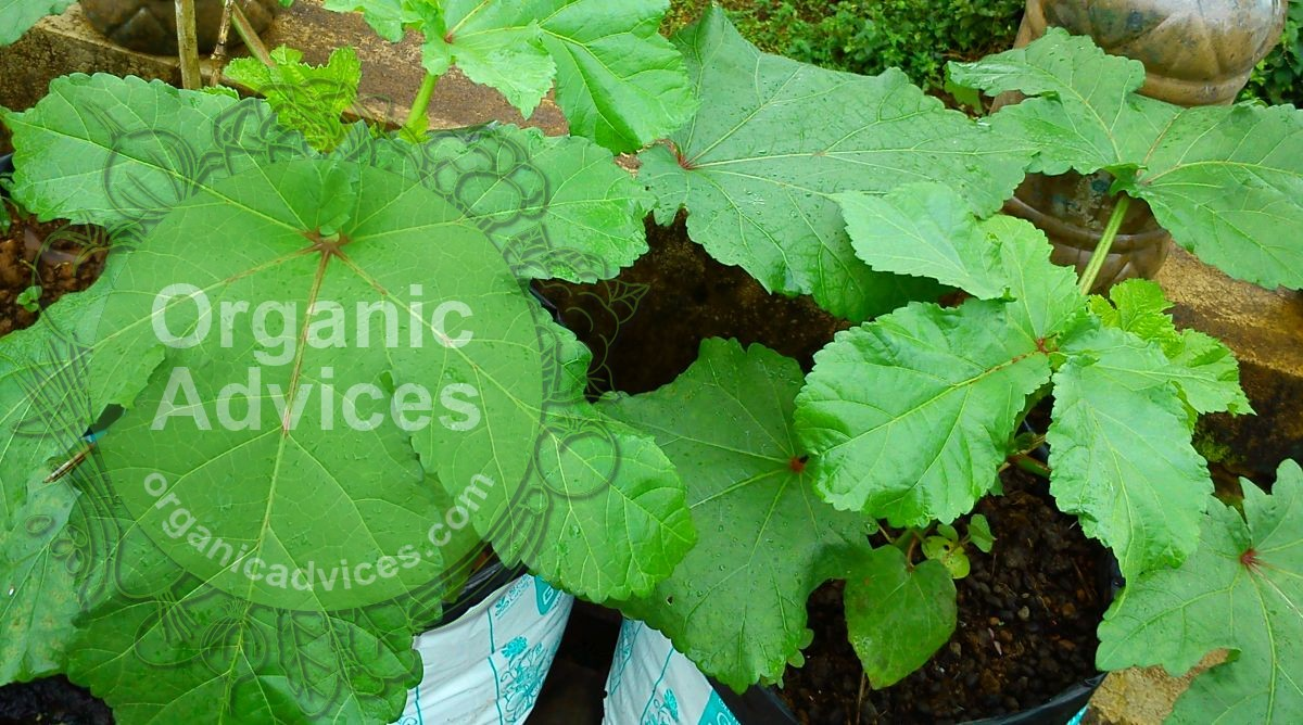 organic fertilizers used in terrace farming